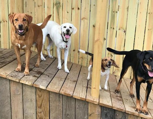 Dogs playing on the deck