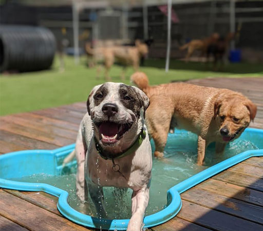 Dogs playing in the pool