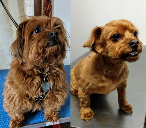 Dog before and after grooming