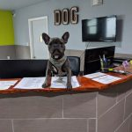 Dog at the front desk